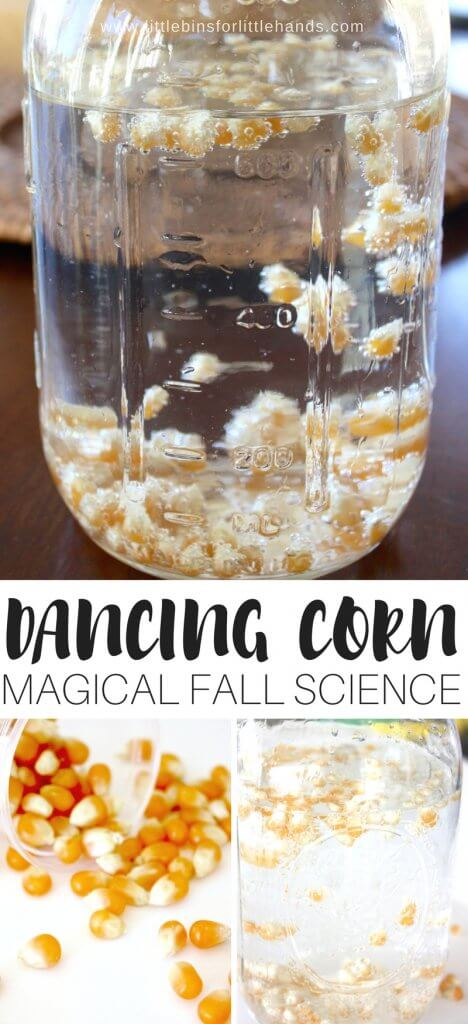 Chemistry with kids that can be done in the kitchen! Set up a fun and easy dancing corn thanksgiving science activity this season! Great for fall science and activities using corn. Harvest science activity that is easy to do with kids in the kitchen.