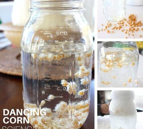 Magical Dancing Corn Thanksgiving Science Experiment