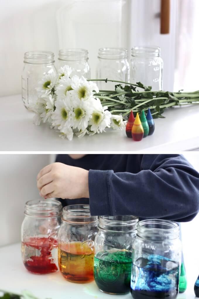 Color Changing Flower Science Experiment Spring Stem