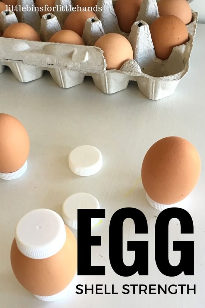 Egg Strength STEM Experiment