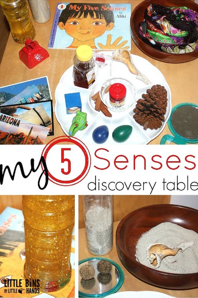 5 Senses for Preschool Science