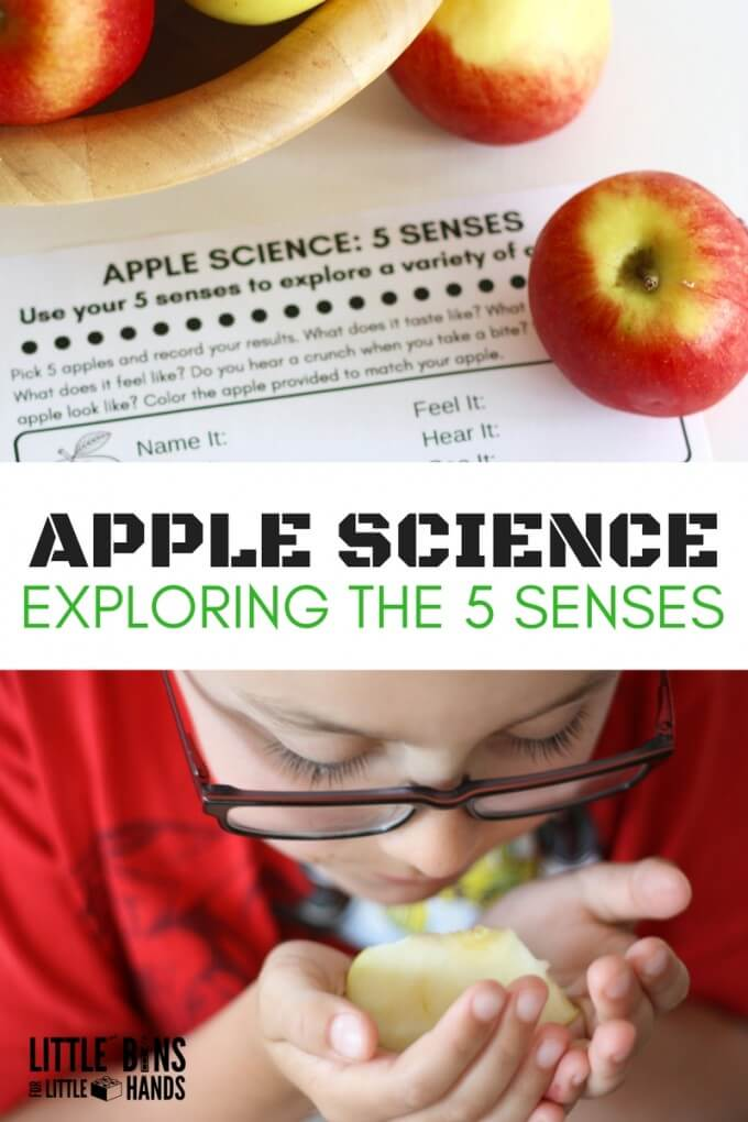 Apple Science Senses Activity for Apple Theme Learning