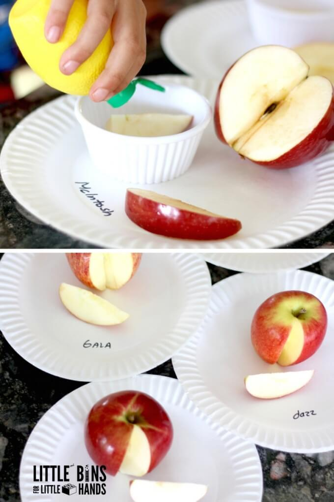 Apple Science Lemon Juice Experiment for Kids Fall STEM
