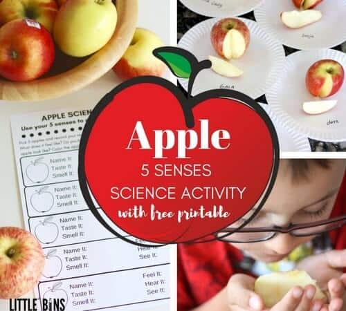 Apple Science Senses Activity with Free Printable