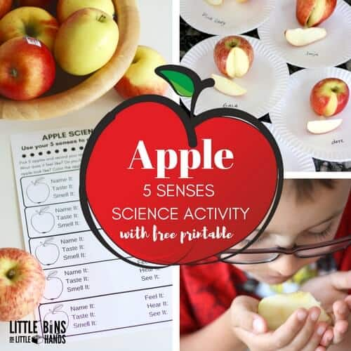 Apple 5 senses edible science for kids