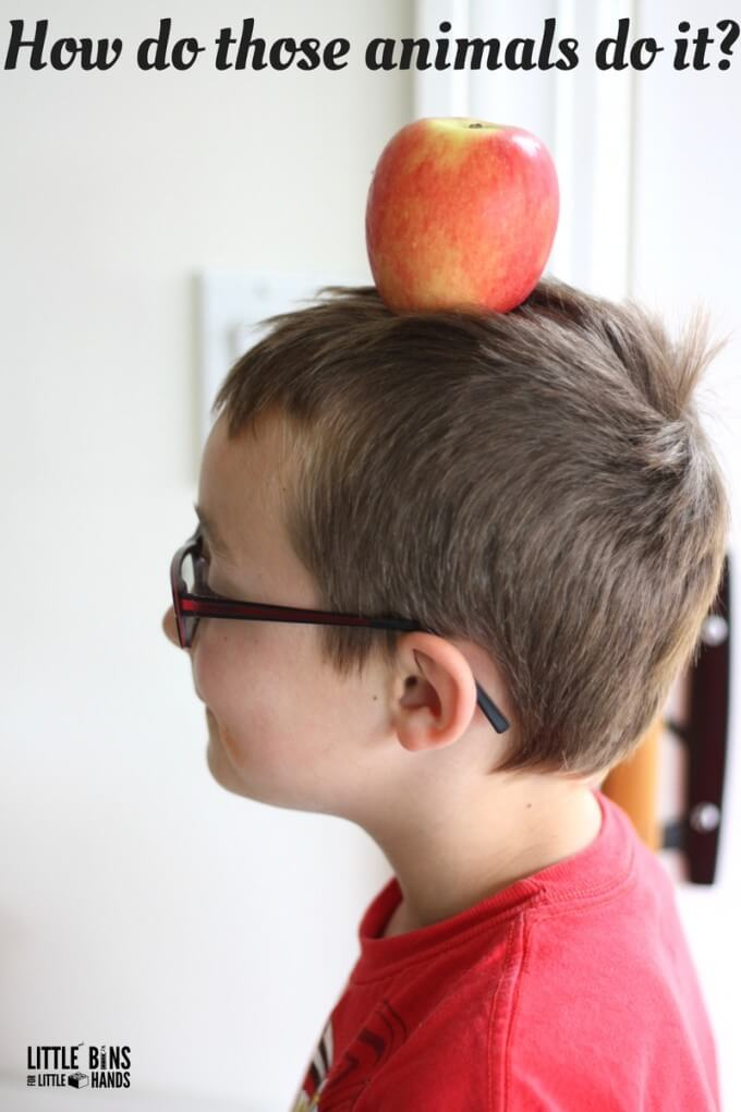 Apple balancing activity