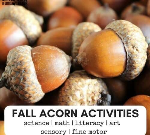Acorn Fine Motor Fall Sensory Activities Science And Math Play