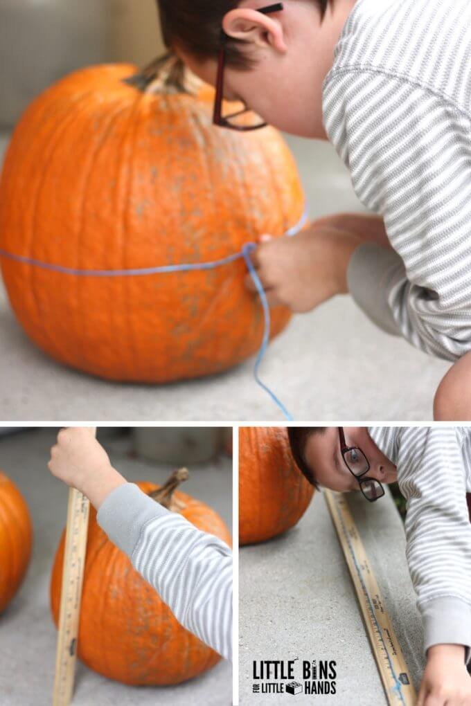 Measuring Pumpkins with String for Circumference Math Activity