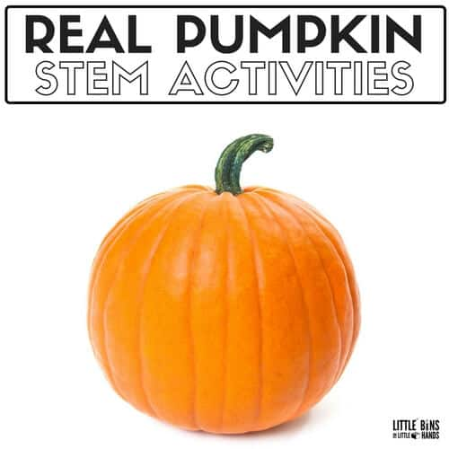 Real pumpkin Science Experiments and Activities and STEM Projects