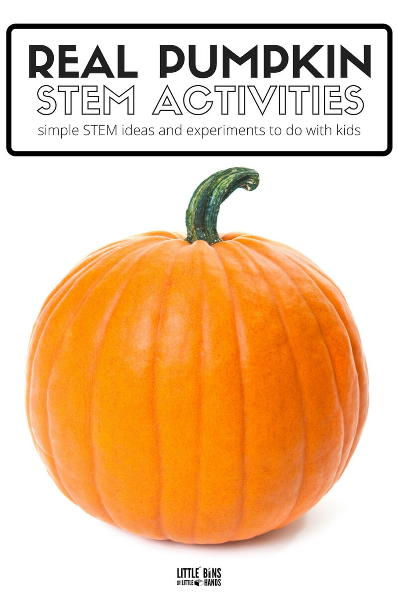 Pumpkin Stem Activities For Fall Little Bins For Little Hands