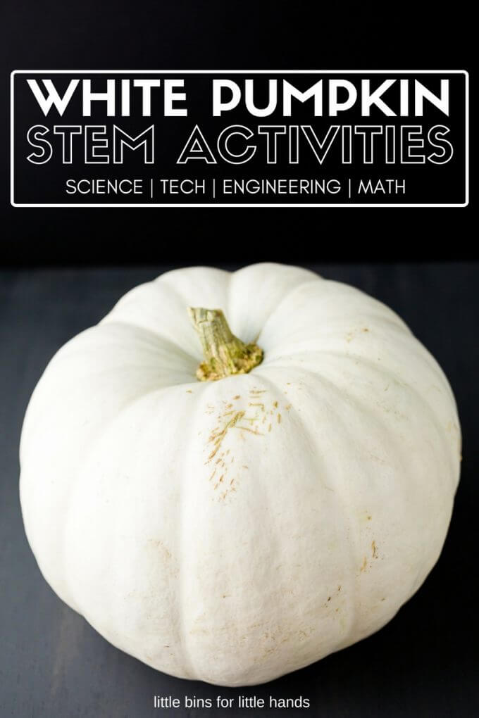 White pumpkin activities for fall STEM.
