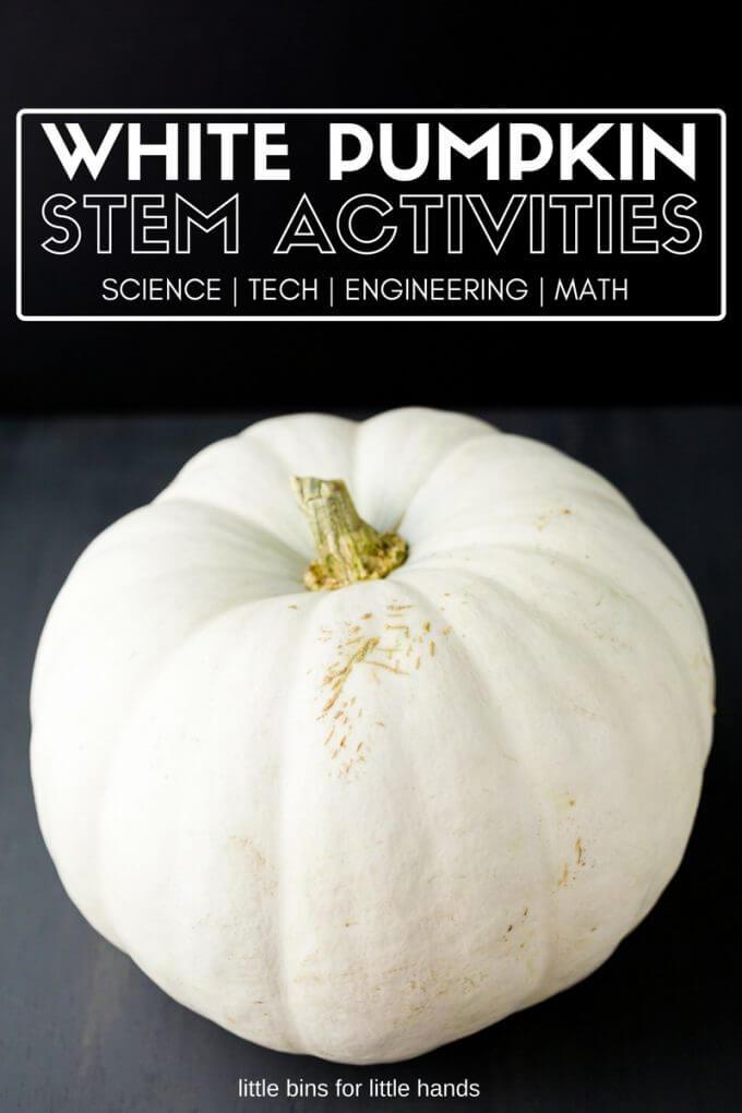 White pumpkin activities for fall STEM.