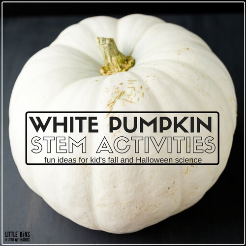 white-pumpkin-stem-and-science-activities