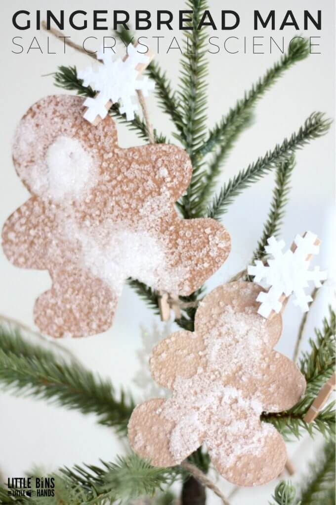 Growing Salt Crystals Gingerbread Man Science Activity for Christmas and Winter Science