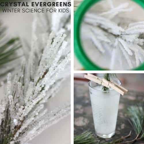 crystal-evergreens