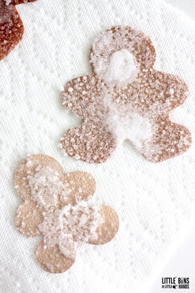 growing salt crystals on construction paper gingerbread men