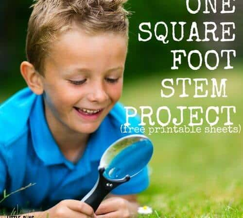Square Foot Outdoor STEM Project and Back Yard Jungle Activity