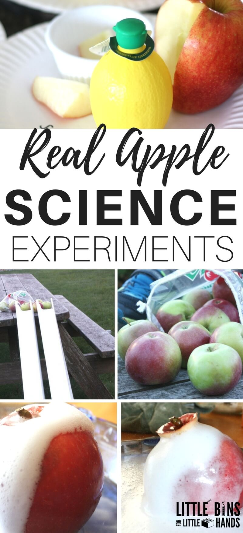Real apple science experiments perfect for fall science and STEM. Parts of an apple science activities, apple volcanos, apple structures, apple 5 senses science, apple and lemon juice experiment and much more all using real apples!