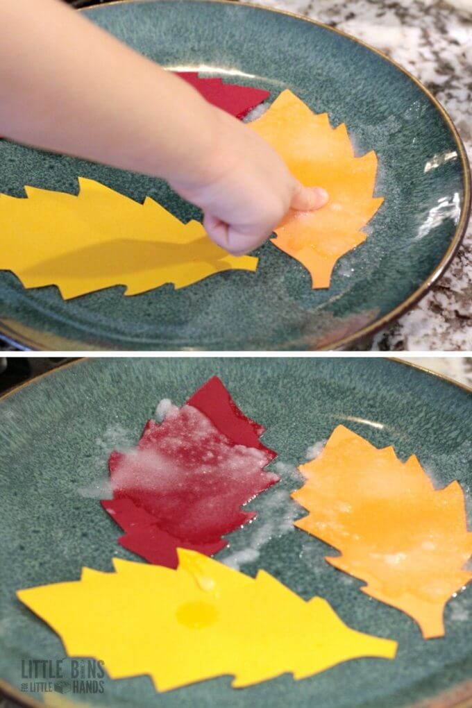Setting up salt crystal leaves science experiment with a saturated solution