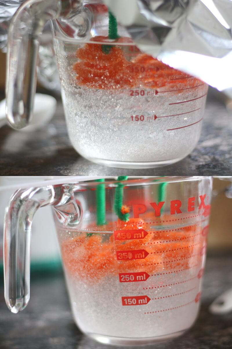 Saturated Solutions with borax crystal growing activity and pumpkin crystal science experiment