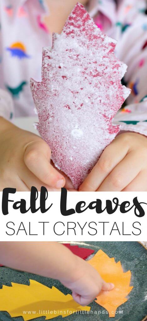 Yay! It's fall and soon the leaves will be changing and turning brilliant shades of yellows, reds, and oranges! I can't wait but until them, we can totally try out leaf themed science activities like this salt crystal leaves science experiment perfect for young kids. Growing salt crystals is a really fun and simple kitchen science style experiment you can do either at home or in the classroom. Simple science and STEM is our favorite no matter what the season.