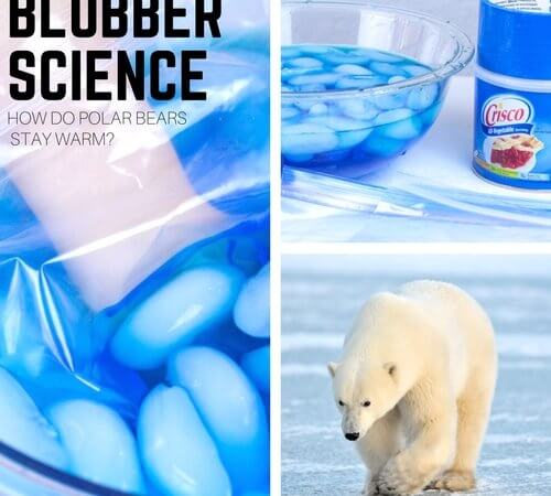Polar Bear Blubber Science Experiment for Kid's Winter Science