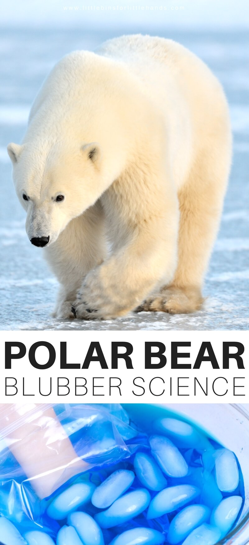 polar bear facts for kids printable image of bear and
