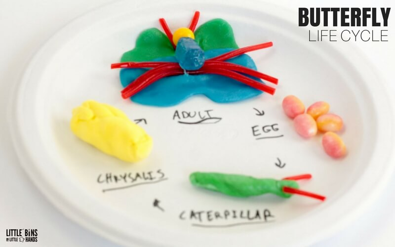 Edible Butterfly Life Cycle Science Activity and Candy science STEM activity