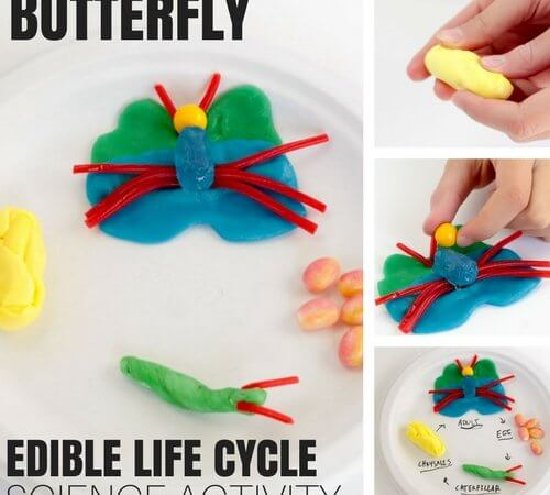 Edible Butterfly Life Cycle Science Activity for Kids Biology