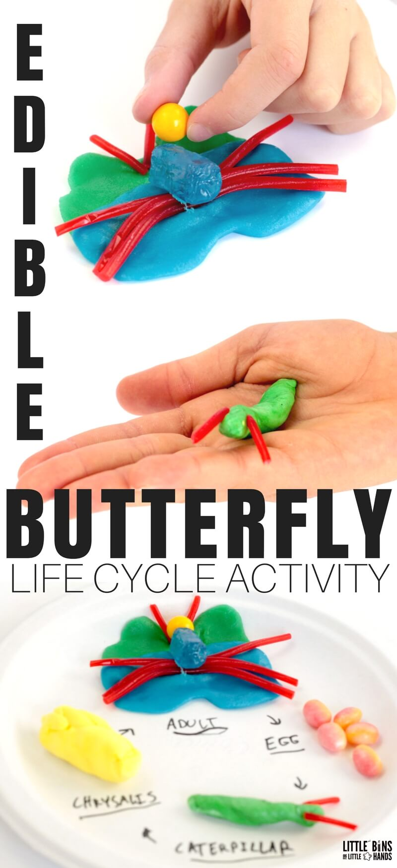 Spring is not only the perfect time to explore butterflies, but it is also the perfect time to make an edible butterfly life cycle. Months of candy filled holidays leave us all with a large pile of candy stored in cabinets. Put some to good use in the name of edible science. This is science and STEM you can eat!