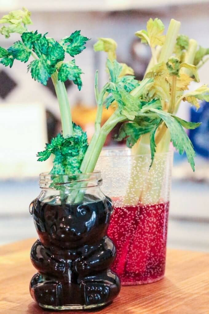 Celery Osmosis Science Experiment And Demonstration For