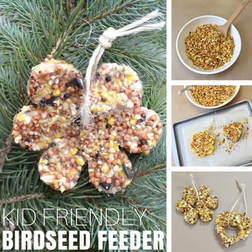 Bird seed ornaments winter science