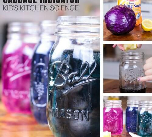 Red Cabbage Science Experiment for Kids Chemistry