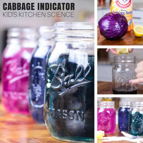 Cabbage juice science experiment and making pH indicator from red cabbage