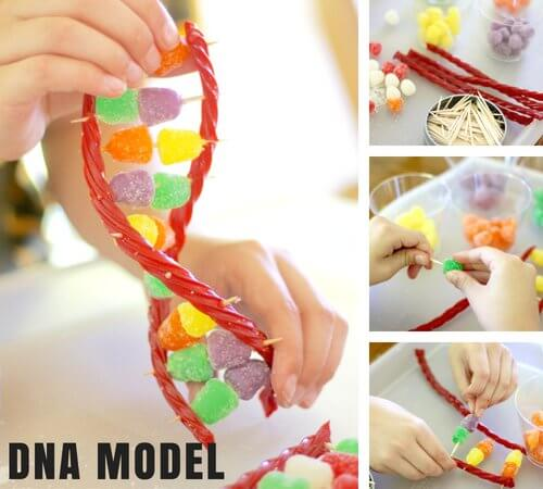Build a Candy DNA Model for Edible Science Activities