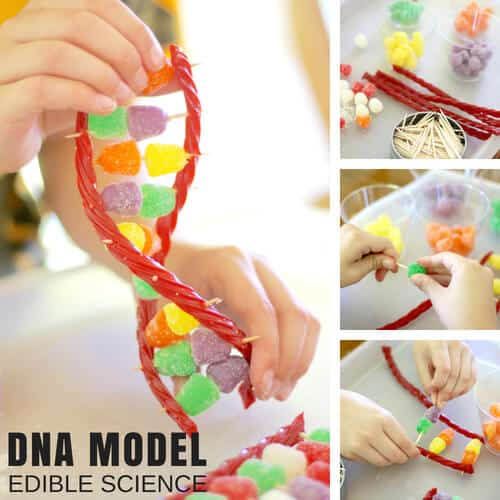 edible science for kids candy DNA model strand