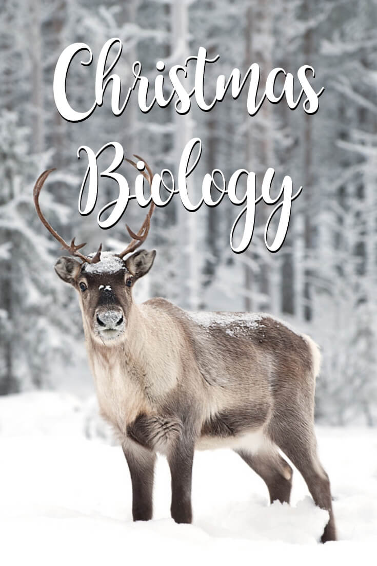 5 Days of Christmas Science for Christmas Biology and Reindeer Facts for Kids