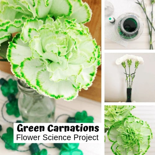 st patricks day activities for kids - color changing carnations