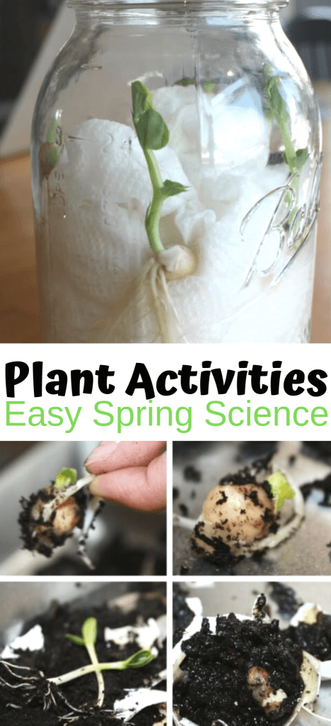 Plant activities for preschool science and spring STEM