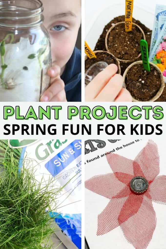 Easy plant activities for preschool and beyond!