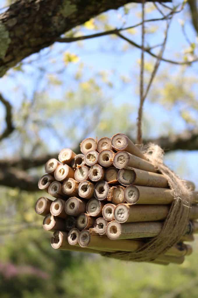 bee habitat hanging from tree